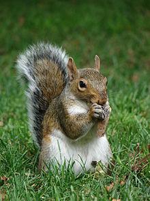 Squirrel Removal NJ