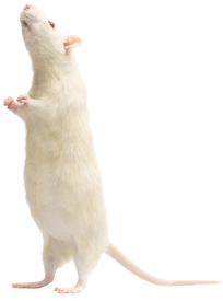 rodent-removal-in-west-orange-nj